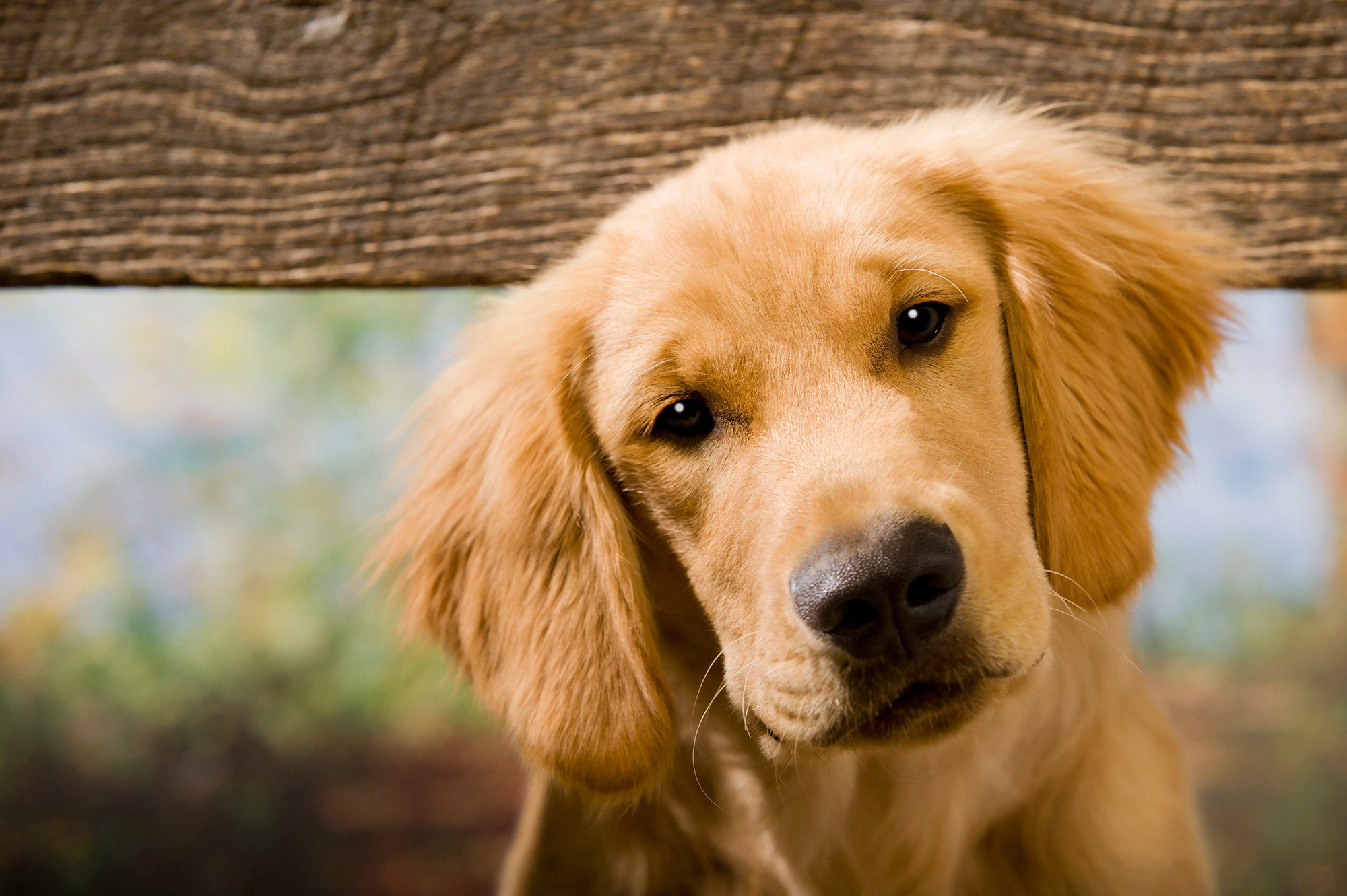 Microchipping in dogs helps lost dogs become found dogs